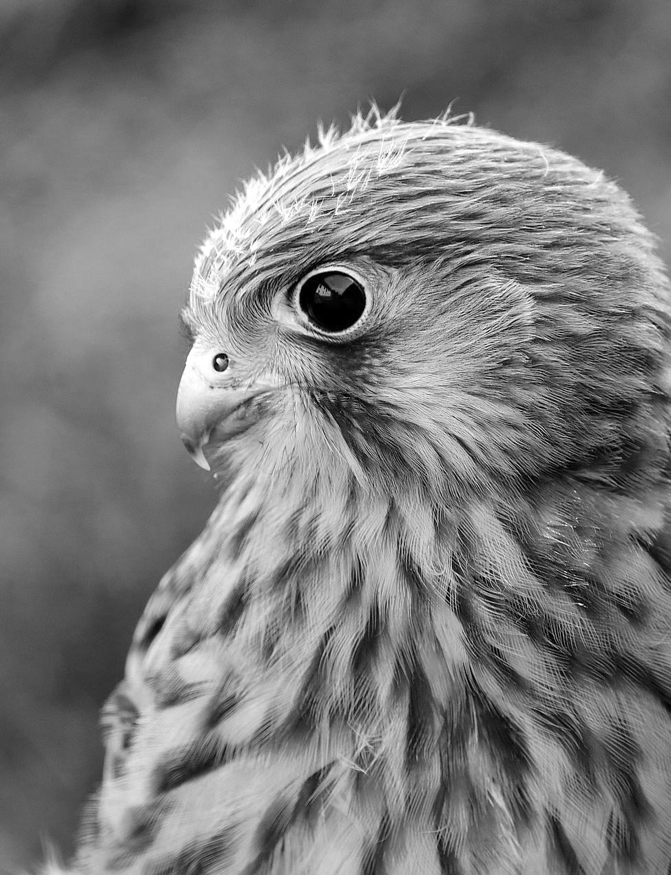 falcon-5350832_1920